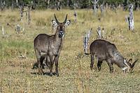 Okavango Delta Animals