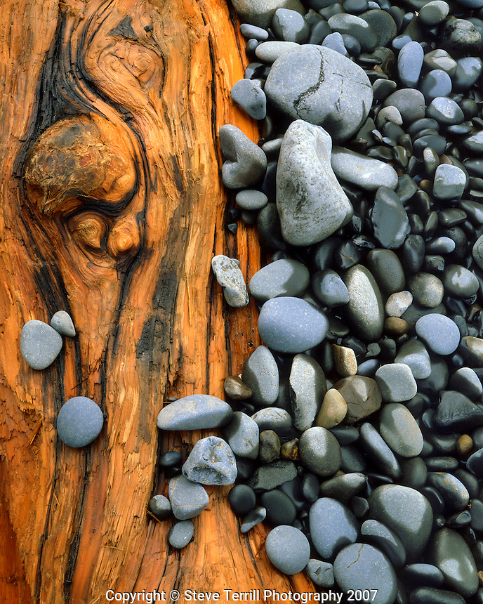 Beach stones and water soaked log on beach at Hug Point State Park on coast of Oregon