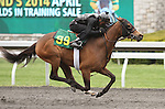 April 03, 2014: Hip 99 Galileo (IRE) 0 Fleeting Spirit (IRE) consigned by Wavertree Stables worked 1/8 in 10:1.  Candice Chavez/ESW/CSM