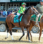 July 5, 2021: Shamrocket, ridden by Irad Ortiz, Jr., in the post parade prior to the 2021 running of the Grand Couturier S. at Belmont Park in Elmont, NY. Sophie Shore/ESW/CSM