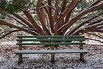 Snowy bench at the Arnold Arboretum in the Jamaica Plain neighborhood, Boston, Massachusetts, USA