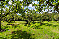 BNPS.co.uk (01202) 558833. <br /> Pic: Hamptons/BNPS<br /> <br /> The house has shared access to the beautiful six acres of gardens that include an orchard<br /> <br /> A grand mews house that was home to Henry Tate's art collection before he gifted it to the Tate Gallery is on the market for £1.8m.<br /> <br /> Henry Tate Mews is part of the former mansion that belonged to the sugar merchant in the late 1800s for 25 years.<br /> <br /> What is now an impressive Grade II* listed double height reception room was his billiard room where he displayed famous Pre-Raphaelite works of art including John Everett Millais' Ophelia.<br /> <br /> The five-bedroom house, which is on the market with Hamptons, also has shared access to the beautiful six acres of gardens that include an orchard, folly and a listed grotto.