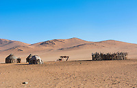 Namibia Africa remote nomadic Himba tribe settlemet of hut homes in desert with traditional dress in desert of Hartmann Berge in Namib Desert in circle with cattle fence in middle