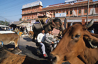 INDIA Rajasthan Jaipur, street traffic with cow and elephant / INDIEN Rajsathan Jaipur, Strassenverkehr mit Kuh und Elefant