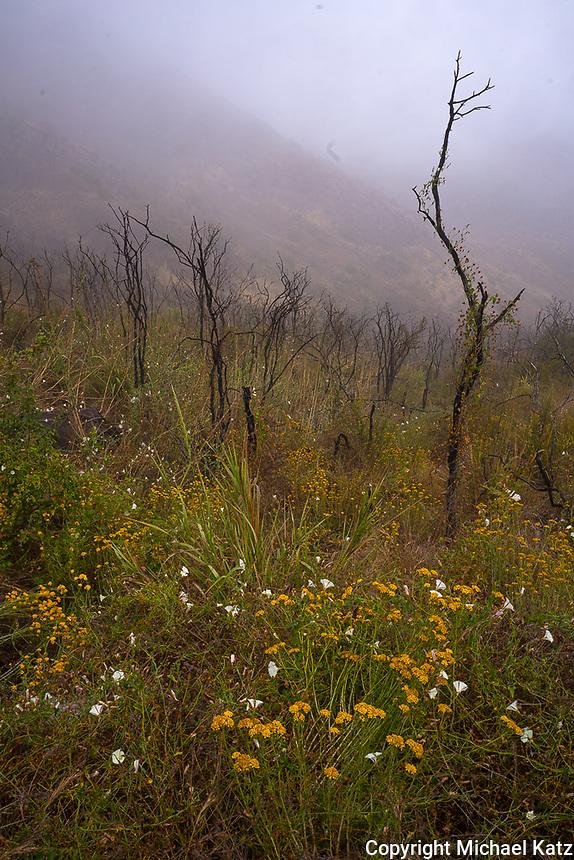 Mishe Mokwa Trail in Fog 2