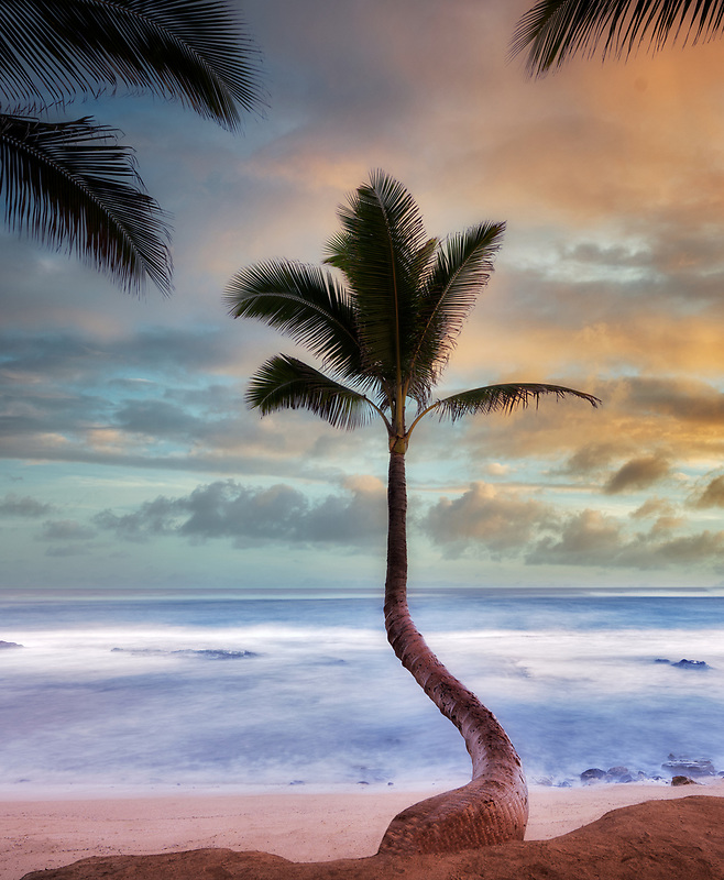 Palm trees and surise clouds. Paia, Maui Hawaii