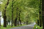 Europa, DEU, Deutschland, Nordrhein Westfalen, NRW, Teutoburger Wald, Oesterholz Haustenbeck, Allee, Baumallee, Fuerstenallee, Kategorien und Themen, Natur, Umwelt, Landschaft, Jahreszeiten, Stimmungen, Landschaftsfotografie, Landschaften, Landschaftsphoto, Landschaftsphotographie, Tourismus, Touristik, Touristisch, Touristisches, Urlaub, Reisen, Reisen, Ferien, Urlaubsreise, Freizeit, Reise, Reiseziele, Ferienziele....[Fuer die Nutzung gelten die jeweils gueltigen Allgemeinen Liefer-und Geschaeftsbedingungen. Nutzung nur gegen Verwendungsmeldung und Nachweis. Download der AGB unter http://www.image-box.com oder werden auf Anfrage zugesendet. Freigabe ist vorher erforderlich. Jede Nutzung des Fotos ist honorarpflichtig gemaess derzeit gueltiger MFM Liste - Kontakt, Uwe Schmid-Fotografie, Duisburg, Tel. (+49).2065.677997, ..archiv@image-box.com, www.image-box.com]