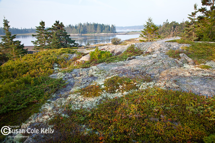 Morning light on Blueberry Hill in Acadia National Park, Downeast, ME, USA