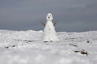 WEATHER PICTURE WALES<br /> Pictured: A snowman on the snow covered Black Mountains near Brynamman, Wales, UK. Wednesday 23 January 2019
