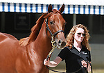September 09, 2014: Hip #231 Distorted Humor - Sealy Hill filly consigned by Gainesway sold for $500,000 to Dixiana Farm at the Keeneland September Yearling Sale.   Candice Chavez/ESW/CSM