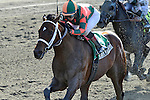 Mark Valeski (no. 5), ridden by Rosie Napravnik and trained by J. Larry Jones, wins the 58th running of the grade 2 Peter Pan Stakes for three year olds on May 12, 2012 at Belmont Park in Elmont, New York.  (Bob Mayberger/Eclipse Sportswire)