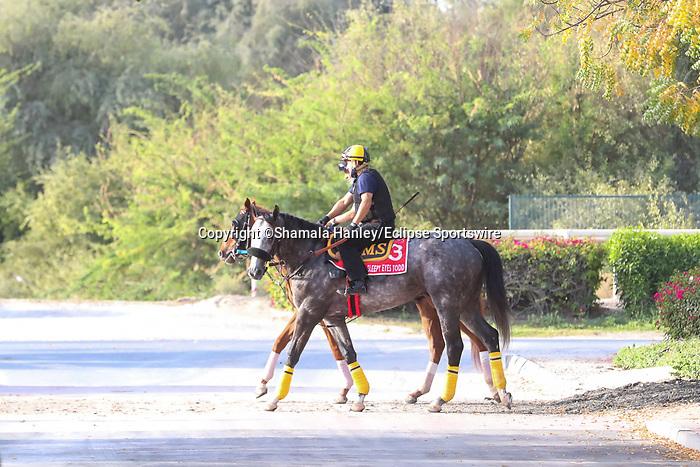 March 25, 2021: Dubai World Cup contender Sleepy Eyes Todd trains on the track for trainer Miguel Silva at Meydan Racecourse, Dubai, UAE.<br /> Shamela Hanley/Eclipse Sportswire/CSM