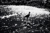 Bird in the surf<br />