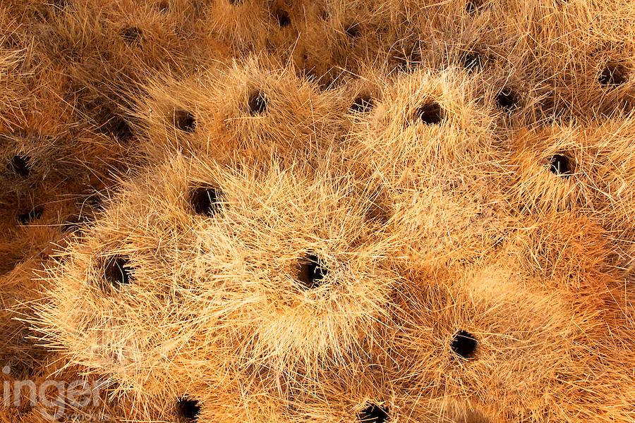 Sociable Weaver Bird Nests in Namibia