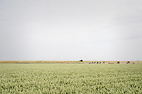 tiny peloton moving in typical Dutch open landscapes<br /> <br /> Ster ZLM Tour (2.1)<br /> Stage 2: Tholen > Hoogerheide (186.8km)