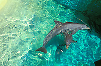 Dolphins at Sea Life Park