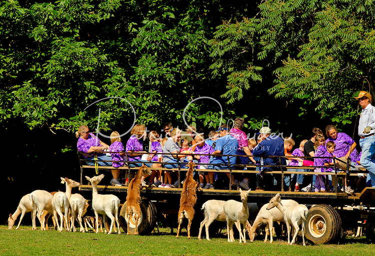 The Lazy 5 Ranch in Mooresville lets visitors talk to, touch and admire domestic and exotic animals from six continents, including giraffe, zebras, buffalo, cattle, sheep, goats, emus, llamas, cows and more. Located at 15100 Mooresville Road, Mooresville NC, (less than an hour from Charlotte, NC), the park is a popular fieldtrip option for kids of all ages.