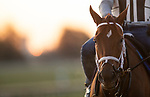 November 3, 2020: Monomoy Girl, trained by trainer Brad Cox, exercises in preparation for the Breeders' Cup Distaff at Keeneland Racetrack in Lexington, Kentucky on November 3, 2020. Carolyn Simancik/Eclipse Sportswire/Breeders Cup