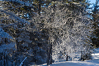 Frosted trees along the shore of Rock Pond in the Adirondack Mountains in New York State