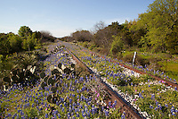 Bluebonnets run along the railroad tracks in Kingsland, Texas rail road train rusty rustic 2010 season prickly pear cactus yucca