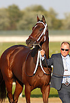 September 22, 2012. My Miss Aurelia, ridden by Corey Nakatani and trained by Steve Asmussen, wins the 43rd running of the Grade 1 Cotillion Stakes at Parx Racing in Bensalem, PA. Miss Aurelia enters the paddock. (Joan Fairman Kanes/Eclipse Sportswire)