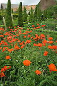 Poppies in the garden of Garsington Manor, Oxfordshire.
