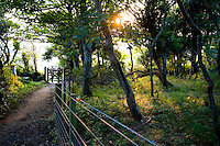 Woodland and footpath, Charlestown, St Austell, Cornwall....Copyright..John Eveson, Dinkling Green Farm, Whitewell, Clitheroe, Lancashire. BB7 3BN.01995 61280. 07973 482705.j.r.eveson@btinternet.com.www.johneveson.com