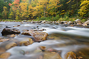Yellow autumn foliage along the Ammonoosuc River, near Zealand Road, in Carroll, New Hampshire during autumn months.