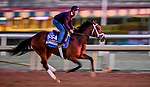October 28, 2019 : Breeders' Cup Filly & Mare Sprint entrant Dawn the Destroyer, trained by Kiaran P. McLaughlin, exercises in preparation for the Breeders' Cup World Championships at Santa Anita Park in Arcadia, California on October 28, 2019. Scott Serio/Eclipse Sportswire/Breeders' Cup/CSM