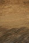 Israel, Sharon region, Calcareous sandstone at Hadera Beach