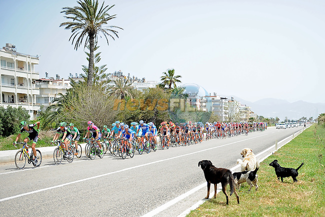 The peloton keep a wary eye on a pack of dogs during Stage 3 of the 2015 Presidential Tour of Turkey running 165.3km from Kemer to Elmali. 28th April 2015.<br /> Photo: Tour of Turkey/Mario Stiehl/www.newsfile.ie