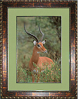 """Image Size:  16""""  x 24""""<br /> Finished Frame Dimensions: 27.5"""" x 35.5""""<br /> Quantity Available: 1"""