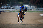 October 31, 2018 : Thunder Snow (IRE), trained by Saeed bin Suroor, exercises in preparation for the Breeders' Cup Classic at Churchill Downs on October 31, 2018 in Louisville, Kentucky. Evers/ESW/Breeders Cup