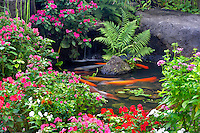 Koi in pond with impatiiens at Kaanapali Shores Resort. Maui. Hawaii