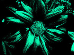 Digital Effect Collections, Digital Abstract Photography, Digital Art Photography, Digital Effect Photography, Abstract Art Photography, Florescent, tapestry, photo painting, image manipulation, artistic photography, flowers, guitar, colors, red, yellow, blue, green, pink, purple, black, teal, etc.