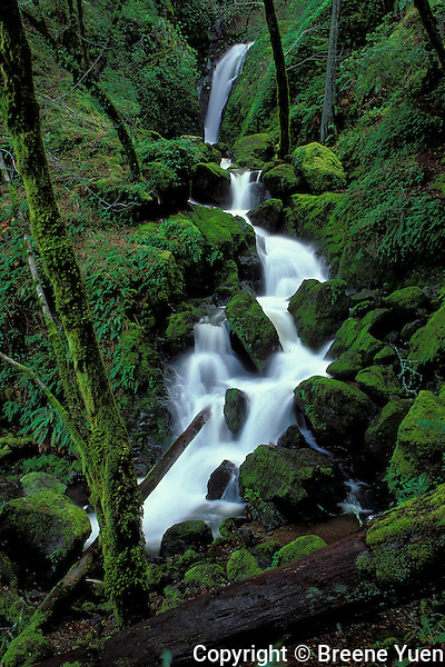 Cataract Falls, Mt. Tamalpias California State Park