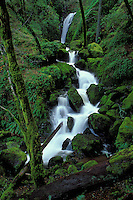 Cataract Falls, Mt. Tamalpias California State Park
