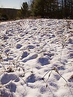Dead plants coming up though the snow<br />