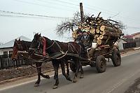 RUMAENIEN, 02.2013, Frumusani. Doerfler unterwegs mit Pferdegespann und Brennholz.   Villagers with horsecart and firewood. © Bogdan Croitoru/EST&OST.