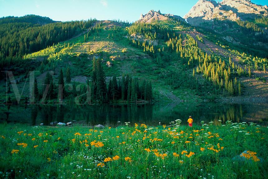 A alpine meadow in the Garden of the Gods. Colorado Springs, Colorado.