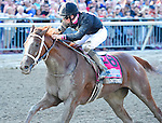 I'm a Chatterbox (no. 8), ridden by Florent Geroux and trained by J. Larry Jones, wins the 46th running of the grade 1 Cotillion Stakes for three year old fillies on September 19, 2015 at Parx Racing in Bensalem, Pennsylvania.  (Bob Mayberger/Eclipse Sportswire)