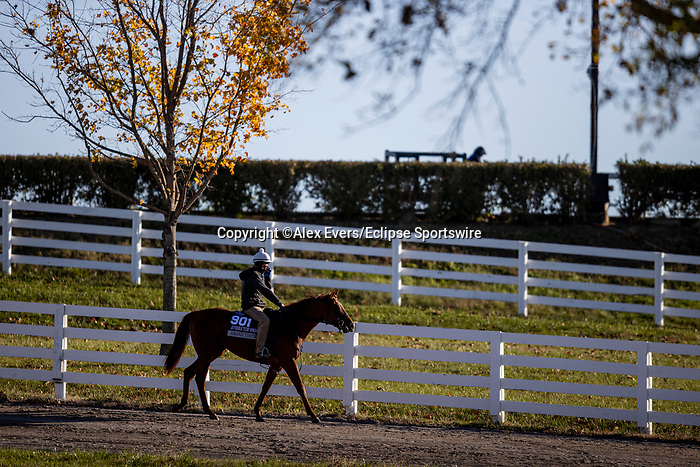 November 3, 2020: Amanzi Yimpilo, trained by trainer Wesley A. Ward, exercises in preparation for the Breeders' Cup Juvenile Turf Sprint at Keeneland Racetrack in Lexington, Kentucky on November 3, 2020. Alex Evers/Eclipse Sportswire/Breeders Cup