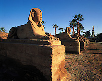 Avenue of the Sphinxes, Luxor temple, Egypt. This image has been altered to remove a series of flood-lights on the ground in front of the statues
