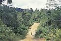 Borneo, Jungle Fever