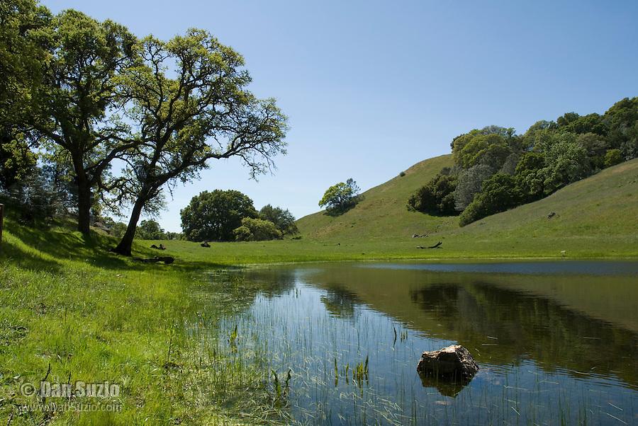 Chase Pond, Mount Diablo State Park, California