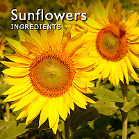 Sunflowers   Sunflower Pictures Photos Images & Fotos