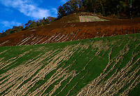 A hillside covered with green plants that sprouted from hydroseed erodes away as rains wash away dirt on a mountaintop removal mine site.  The brown hill above is where the hydroseed did not take and died off.