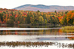 Fall foliage along the Androscoggin River oxbow in Dummer, NH, USA