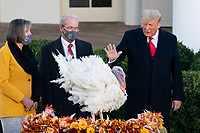 """President Trump Pardons the National Thanksgiving Turkey<br /> <br /> President Donald J. Trump, joined by First Lady Melania Trump, pardons """"Corn"""" as the 2020 National Thanksgiving Turkey Tuesday, Nov. 24, 2020, during the annual pardoning of the National Thanksgiving Turkey in the Rose Garden of the White House. (Official White House Photo by Andrea Hanks)"""