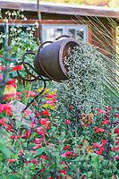 Loma Prieta Fountain container with Oscularia; Roger Raiche Berkeley Maybeck Cottage garden